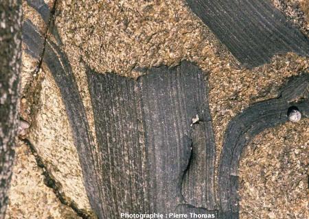 Gros plan sur une enclave d' encaissant dans le granite de Ploumanac'h, île Milliau, Trébeurden, Côtes d'Armor