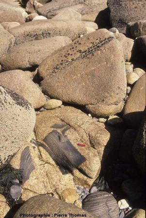Bloc de granite à enclave, île Milliau, Trébeurden, Côtes d'Armor