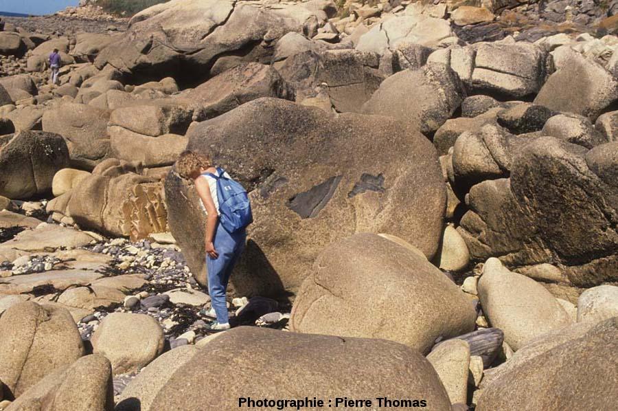 Gros bloc de granite contenant 3 enclaves anguleuses «intactes», côté Sud de l'île Milliau, Trébeurden, Côtes d'Armor