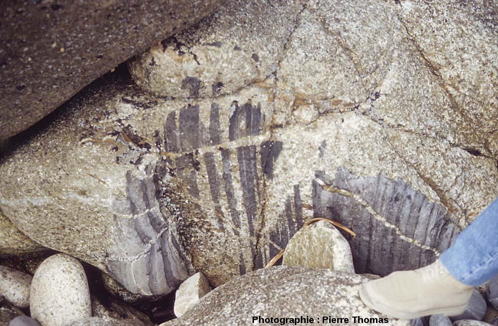 Vue détaillée d'une enclave où la pénétration-dilacération par le magma est à un stade avancé, l'île Milliau, Trébeurden, Côtes d'Armor