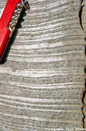 L'encaissant du granite de Ploumanac'h, à quelques mètres du contact avec le granite, au Sud de l'île Milliau, Trébeurden, Côtes d'Armor