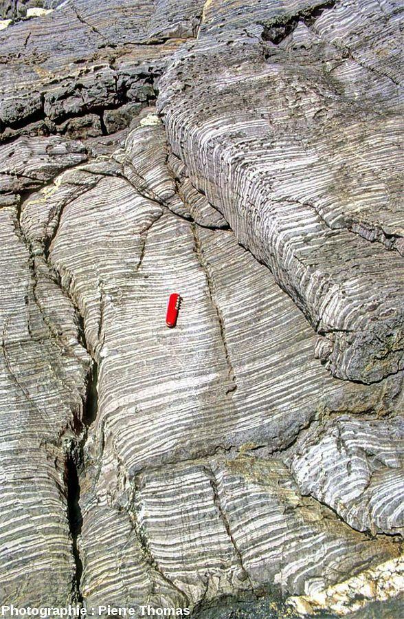 Vue d'ensemble sur les alternances gréso-pélitiques (verticales) maintenant métamorphisées, au Sud de l'île Milliau, Trébeurden, Côtes d'Armor
