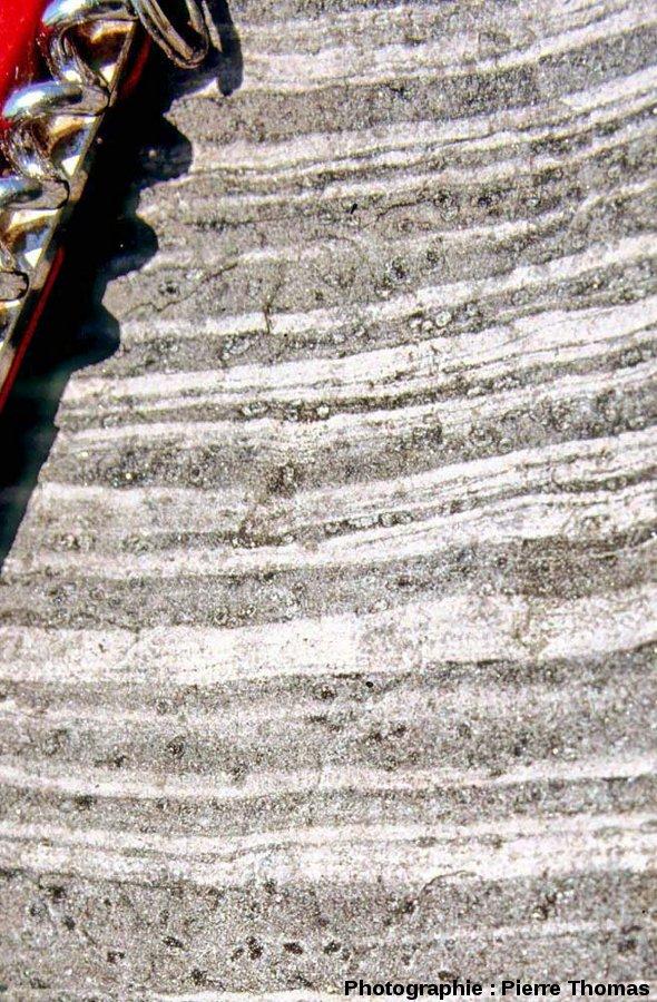 Les alternances claires et sombres de l'encaissant du granite de Ploumanac'h, au Sud de l'île Milliau, Trébeurden, Côtes d'Armor.