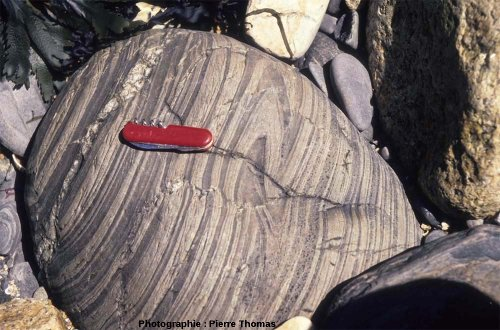 Gros bloc d'encaissant montrant de beaux plis, contact Sud du granite de Ploumanac'h, l'île Milliau, Trébeurden, Côtes d'Armor