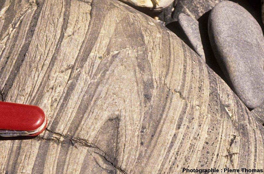 Détail de plis de l'encaissant, contact Sud du granite de Ploumanac'h, l'île Milliau, Trébeurden, Côtes d'Armor