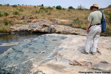 Contact «normal» (presque sans brèche) entre le granite de Theespruit (à droite, couleur rosée) et son encaissant amphibolitique (plus sombre, à gauche), Elukwatini (Afrique du Sud)