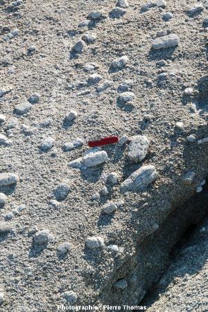 Gros plan sur la granodiorite du Monte Capanne au Capo San Andrea, île d'Elbe (Italie)