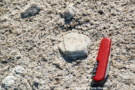 Phénocristal maclé d'orthose, granodiorite du Monte Capanne au Capo San Andrea, île d'Elbe (Italie)