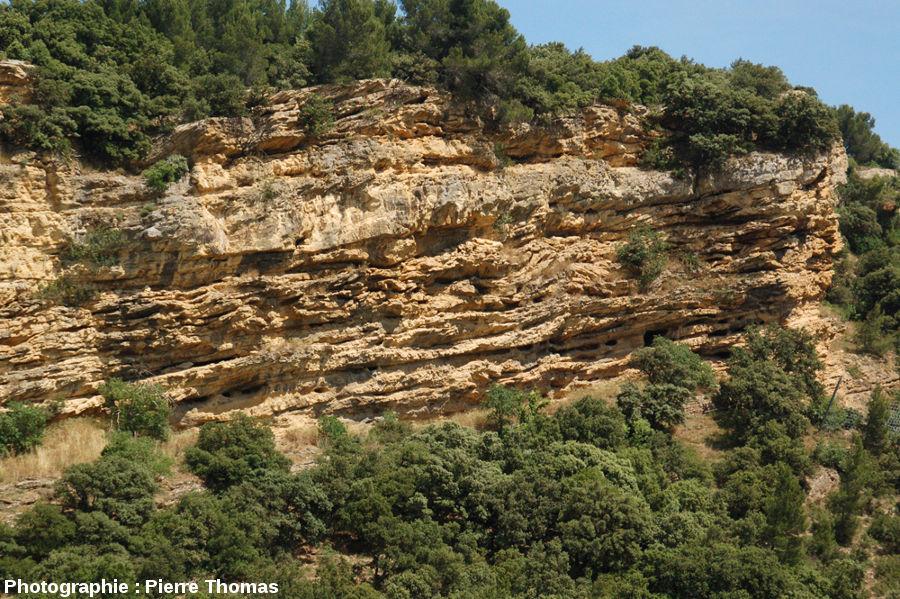 Partie Sud de la falaise de Piolenc (Vaucluse)
