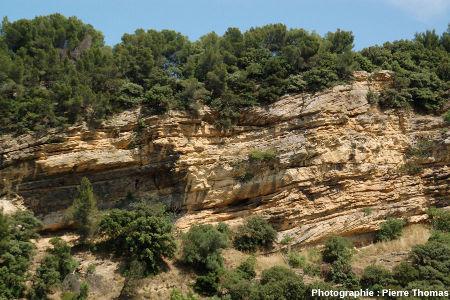 Partie Nord de la falaise de Piolenc (Vaucluse)