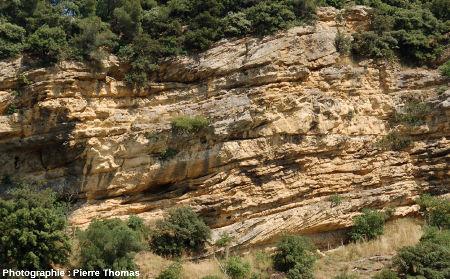 Stratifications obliques progradantes (en bas et en haut) et stratifications en lentilles (au centre) dans la partie Nord de la falaise de Piolenc (Vaucluse)