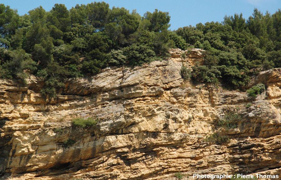 Détail de stratifications lenticulaires, falaise de Piolenc (Vaucluse)
