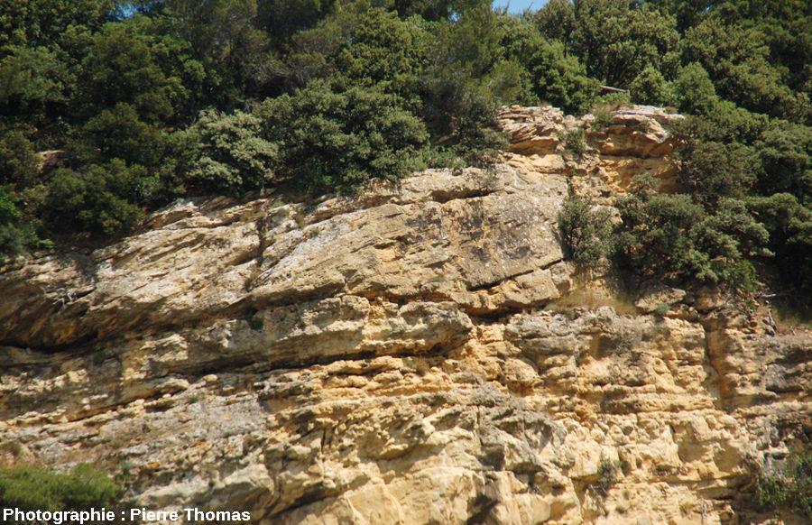 Détail de stratifications obliques progradantes, falaise de Piolenc (Vaucluse)