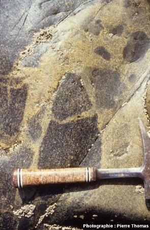 Brèche magmatique causée par l'intrusion de petites quantités de magma acide au sein d'un gabbro déjà cristallisé, plage de Saint Jean du Doigt (Finistère)