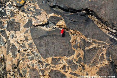 Gros plan sur la brèche magmatique au contact oriental du filon de plagiogranite, plage de Saint Jean du Doigt (Finistère)