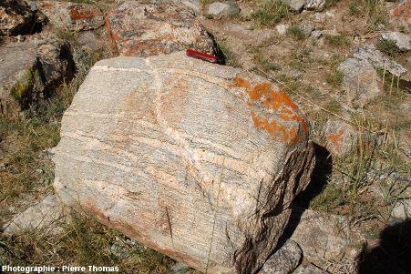 Une migmatite, quelque part dans l'Altaï Mongol.