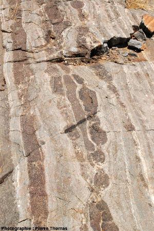 Boudins basiques dans les migmatites de la Sand River, Afrique du Sud