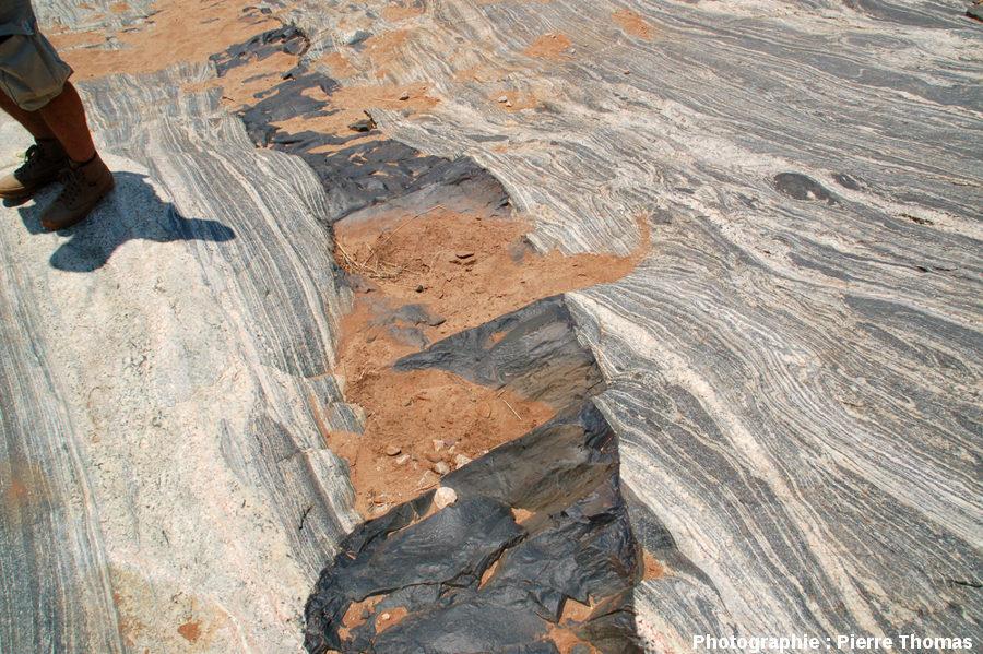 Dyke basaltique de 40cm de large recoupant les migmatites de la Sand River, Afrique du Sud