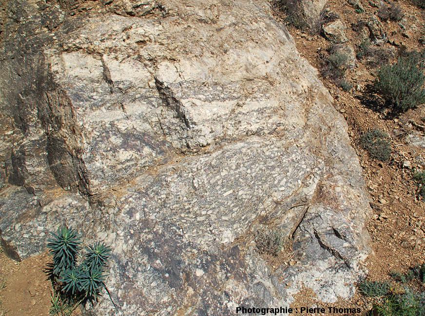 Détail montrant un mélange peu poussé entre les 2 faciès de granite, les Albas, commune de Felluns (Pyrénées Orientales)