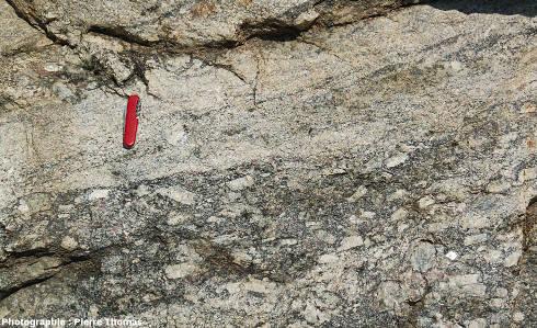 Autre dtail montrant un mélange un peu plus poussé entre les 2 faciès de granite, les Albas, commune de Felluns (Pyrénées Orientales)