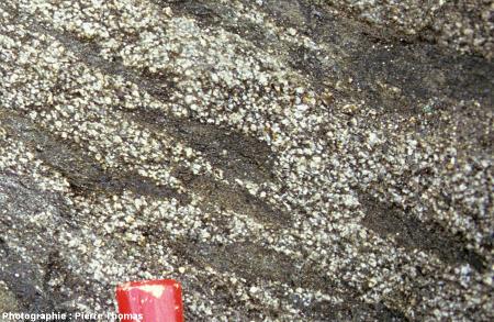 Gros plan sur l'affleurement de la figure1 dans le granite de Quérigut-Millas, Puyvalador (Pyrénées Orientales)