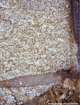 Détail d'un affleurement dans le faciès porphyroïde du granite de Quérigut-Millas, près de Vinça (Pyrénées Orientales)