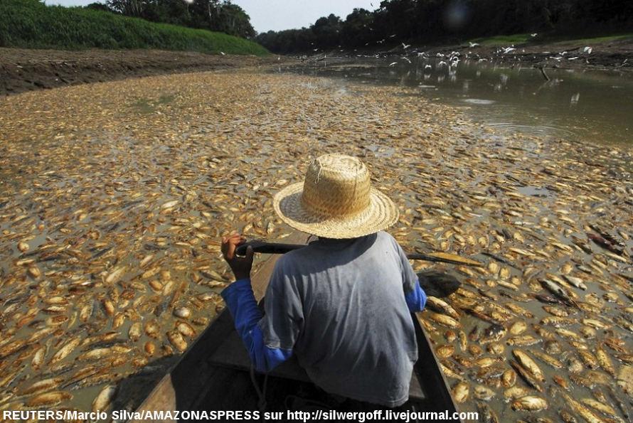 Paysage amazonien lors de la grande sécheresse de l'hiver 2009-2010