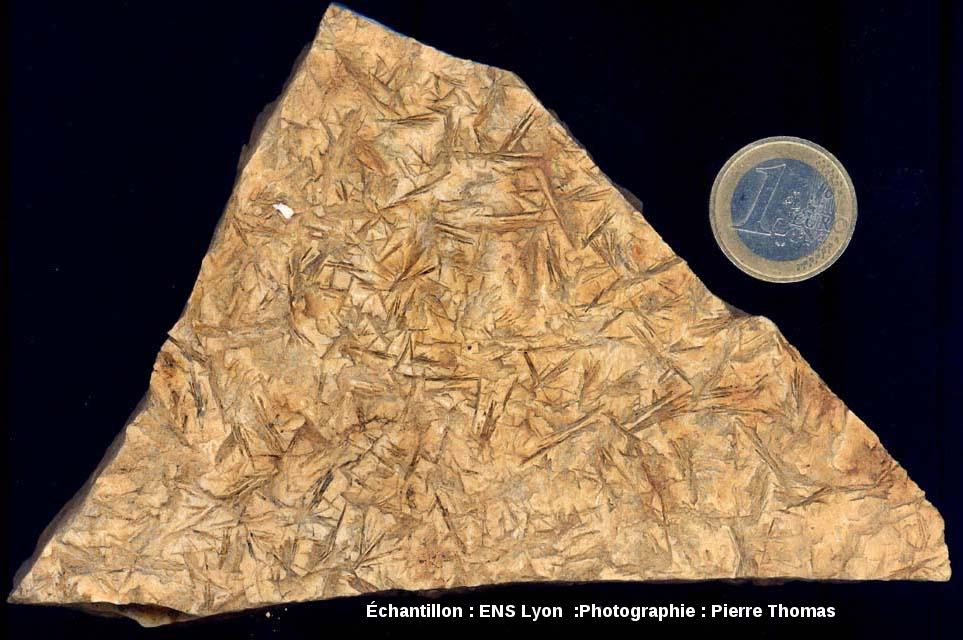 Plan de stratification d'une pélite permienne montrant des empreintes (en creux) de cristaux (en forme d'aiguilles) maintenant disparus, carrière de Loiras, Le Bosc, Hérault