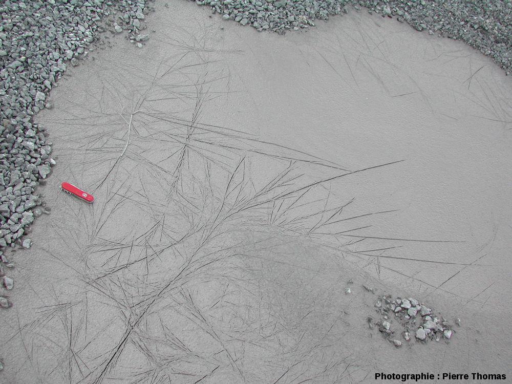 Empreintes de cristaux de glace dans une flaque d'eau actuelle, montrant que ceux-ci peuvent atteindre de grande taille