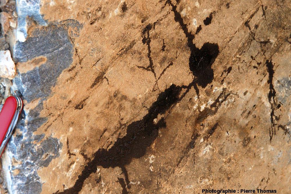Détail d'un bloc de dolomie dont les joints de stratification sont remplis de pétrole