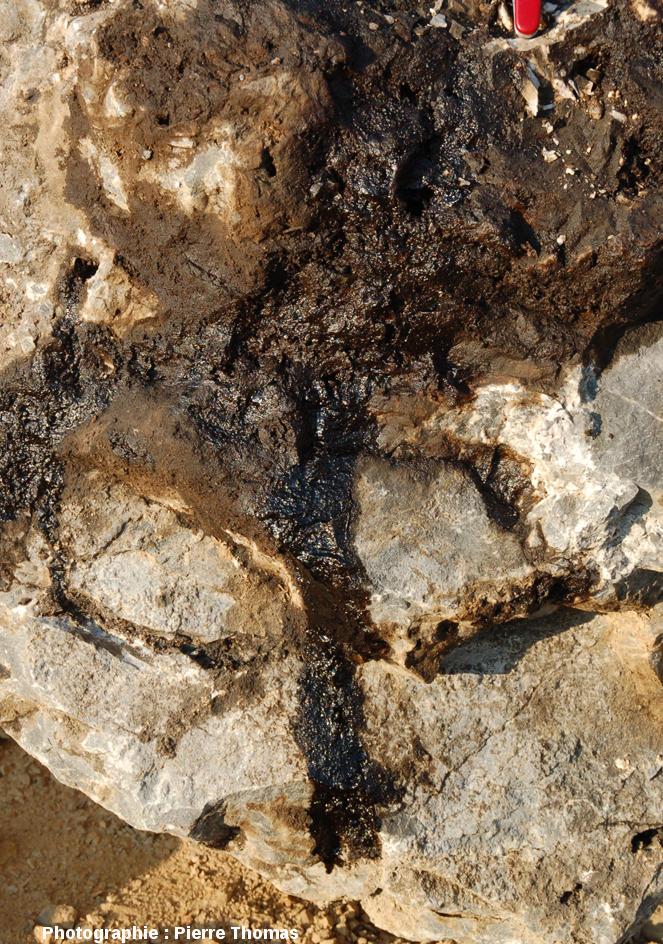 Détail d'un bloc de dolomie avec du pétrole s'échappant des cavités et géodes ouvertes par l'exploitation de la carrière, Loiras, Hérault