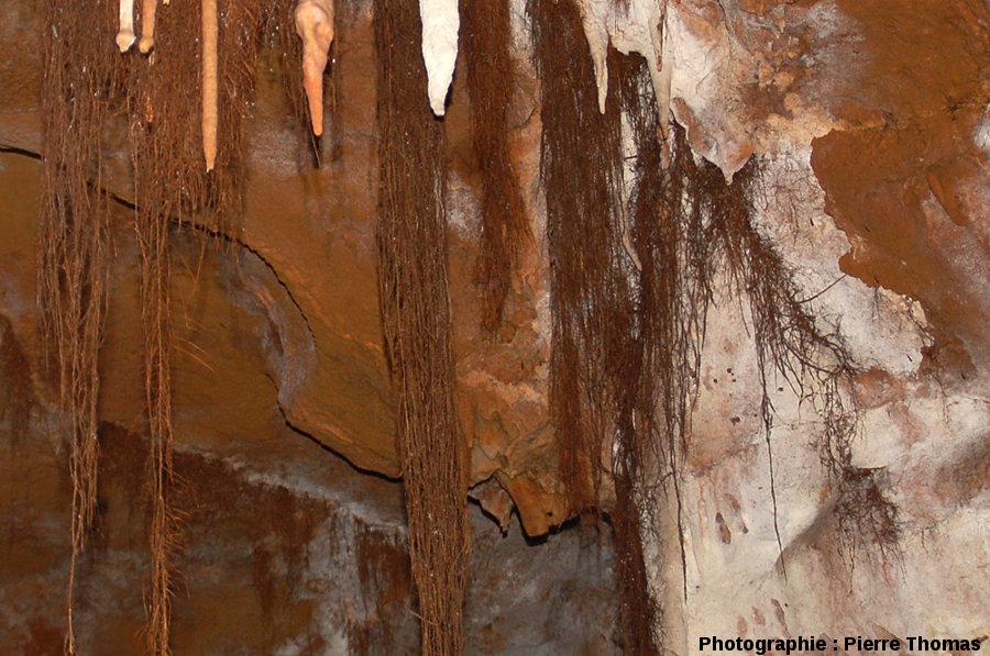 Un deuxième secteur du plafond de la grotte du Bosc, Saint-Antonin Noble-Val, Tarn et Garonne