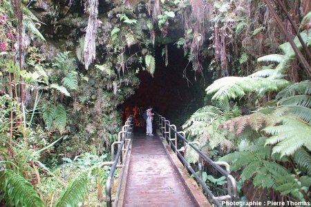 Entré du tunnel de lave de Thurston (Thurston Lava Tube), Hawaï