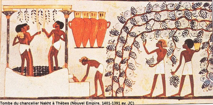 Vendanges sous la XVIIIème dynastie (1590-1390 av. JC) en Égypte