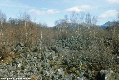 Surface de la cheire du Puy de Côme dans un de ses rares secteurs peu boisés et peu végétalisés
