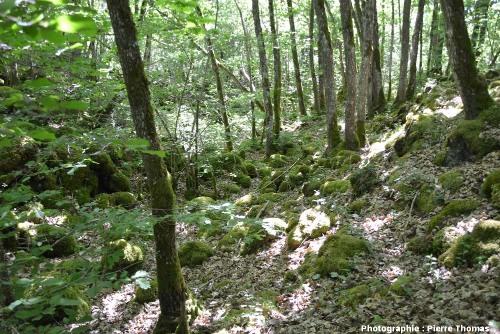 Vue plus «représentative» de la surface de la cheire du Puy de Côme