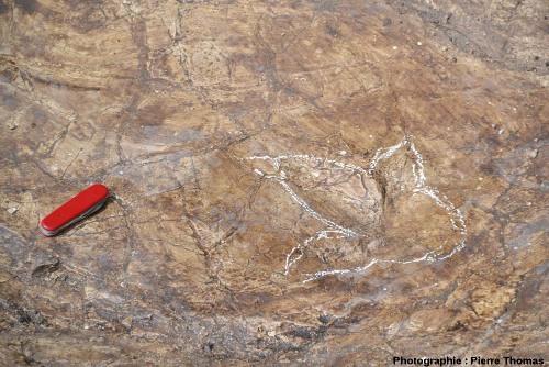 Gros plan sur l'empreinte de pas d'un théropode à l'intérieur d'une empreinte de sauropode, chantier de fouille de Plagne (Ain)