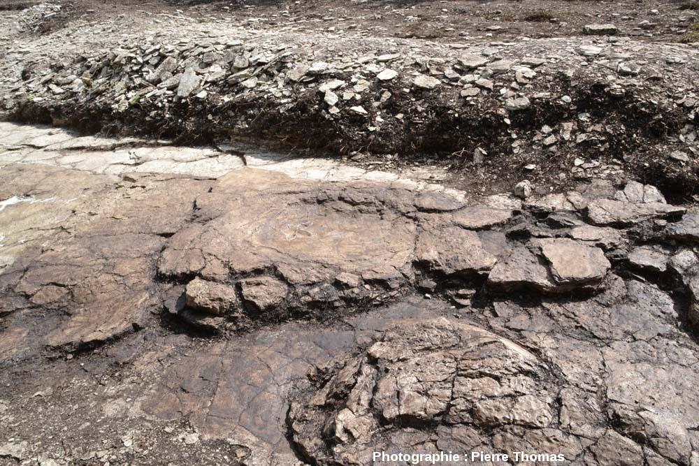La double empreinte théropode + sauropode, chantier de fouille de Plagne (Ain), dans son état au 1er août 2011