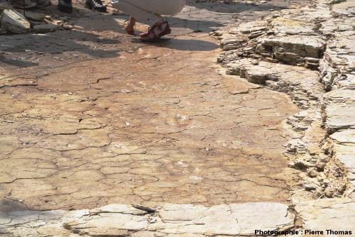 L'une des deux pistes de théropode trouvées à Plagne (Ain) lors des fouilles de 2011