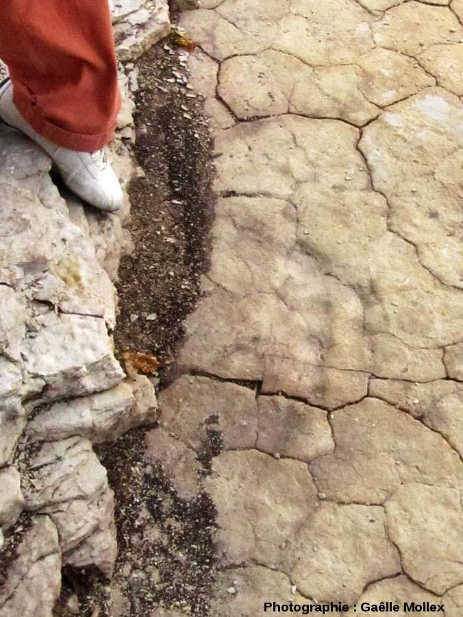 L'une des 3 empreintes de théropode de la deuxième piste découverte à Plagne lors des fouilles de 2011