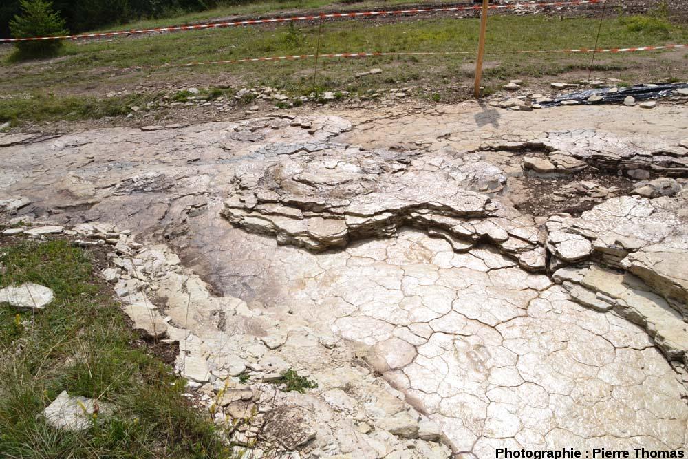 Vue d'ensemble sur l'amont de la deuxième piste de théropode, située 20cm plus bas que la piste de sauropode, Plagne (Ain)