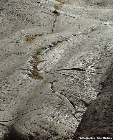 Poli glaciaire avec stries et cannelures, Central Park, New York (USA)