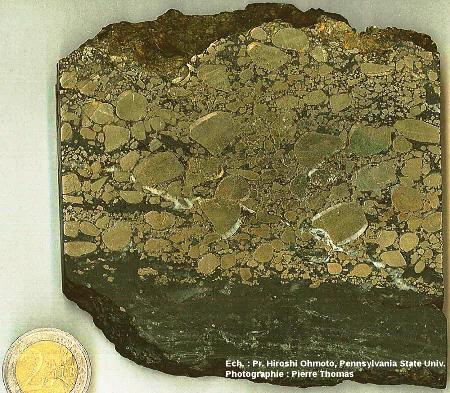 Conglomérat (poudingue) à galets de pyrite (FeS2) interstratifié avec des silts et argilites noires, Archéen du Witwatersrand, Afrique du Sud