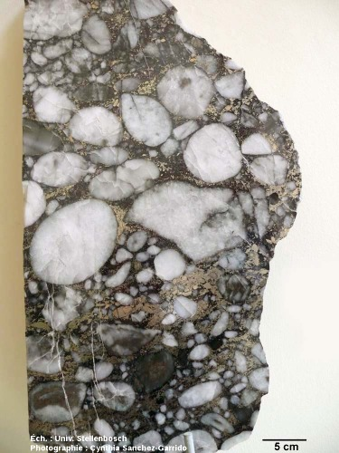 Conglomérat (poudingue) à galets de pyrite et de quartz, Archéen du Witwatersrand, Afrique du Sud