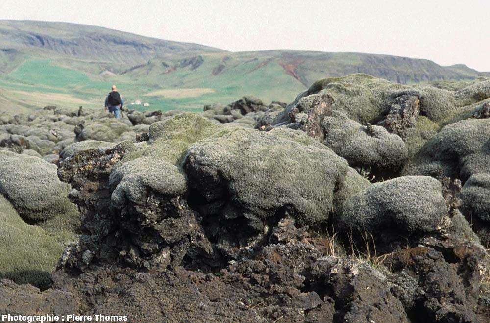 Coussins de mousses sur un secteur de la coulée du Lakagigar (Laki en français) près de la côte Sud islandaise