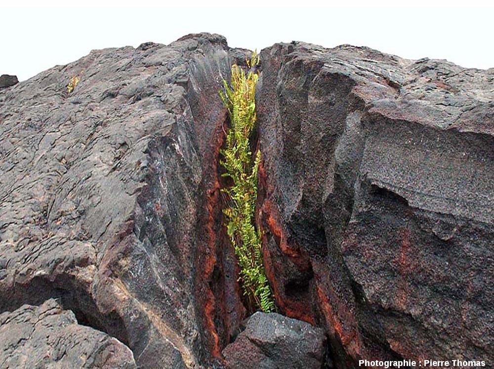 Vue de détail d'une ride de pression (pressure ridge) affectant une coulée vieille de plusieurs siècles, flanc Sud du Kilauea (Hawaii)