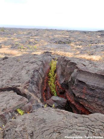 Vue d'ensemble d'une ride de pression (pressure ridge) affectant une coulée vieille de plusieurs siècles, flanc Sud du Kilauea (Hawaii)