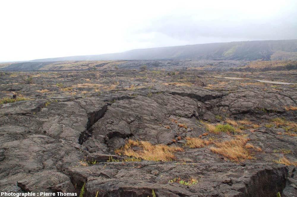 Surface d'une vieille coulée de lave, flanc Sud du Kilauea (Hawaii)