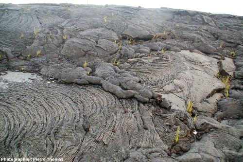 Vue d'ensemble d'une coulée pa hoe hoe récente du Sud du Kilauea (Hawaii)