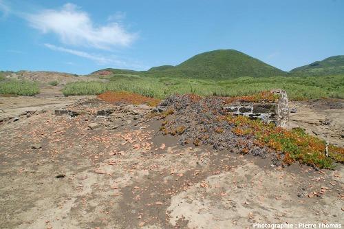 Ruines d'une maison dépassant des cendres du Capelinhos, île de Faial, Açores